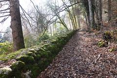 Trail @ Forest @ Sevrier