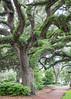 Urban trees / Savannah Georgia / Chatham Square