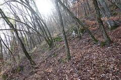 Forest trail @ Semnoz