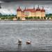 Moritzburg mit Enten
