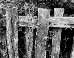 Photo of Old fence