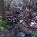 Boone Fork Loop