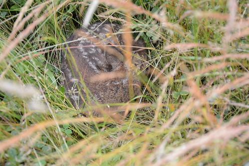 Dank Jäger und Gäste haben wir die Rehkitze in der Wiese vor den Mährarbeiten gefunden