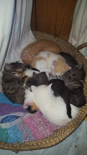 Katzenglück am Miniponyhof