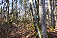 Forest @ Semnoz