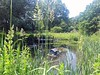 Pond at Hirst Wood Nature Reserve