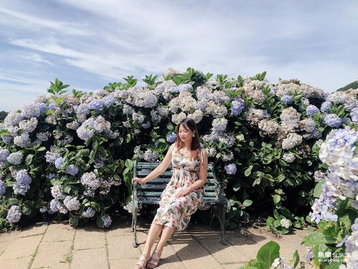 【台北北投】2020繡球花季|陽明山竹子湖|花與樹繡球花田|門票交通資訊 @魚樂分享誌