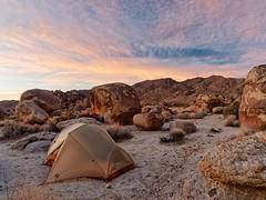 """Joshua Tree National Park, """"Camping del Sol,"""" Tent"""