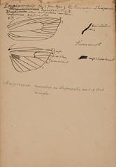 Anglų lietuvių žodynas. Žodis genus carpocapsa reiškia genties carpocapsa lietuviškai.