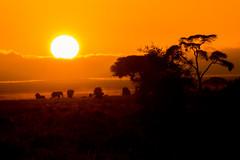 Sunrise, Amboseli National Park, Kenya