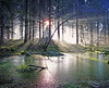 Atholl Woods(Polney Tarn)