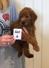 Carly Girl 4 6-28