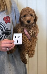 Carly Girl 1 6-28
