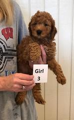 Carly Girl 3 pci 3 6-28