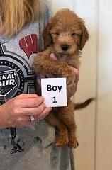 Cary Boy 1 pic 4 6-28