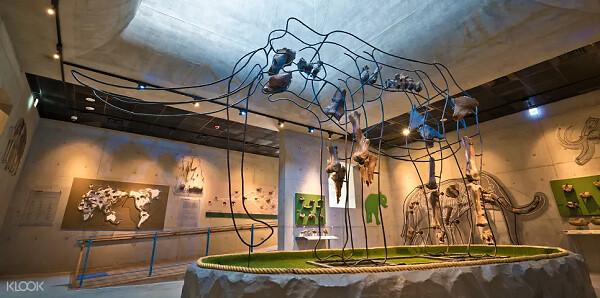 (圖10)來到台南左鎮化石園區,欣賞以工藝創作手法展現的台灣大象化石,一窺大象骨骼奧妙