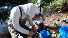 Measuring and tagging trout