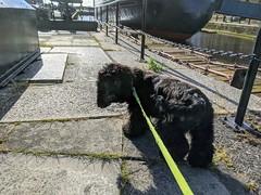Photo of Dexter, Leith Docks, June 2020