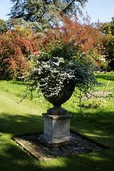 Photo of Feeringbury Manor lawn urn planter, Feering Essex England 1