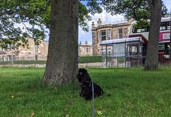 Photo of Dexter, Victoria Park, Edinburgh, June 2020