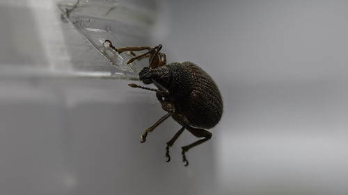 Fridge bug