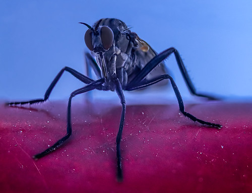 Mosquito relaxing