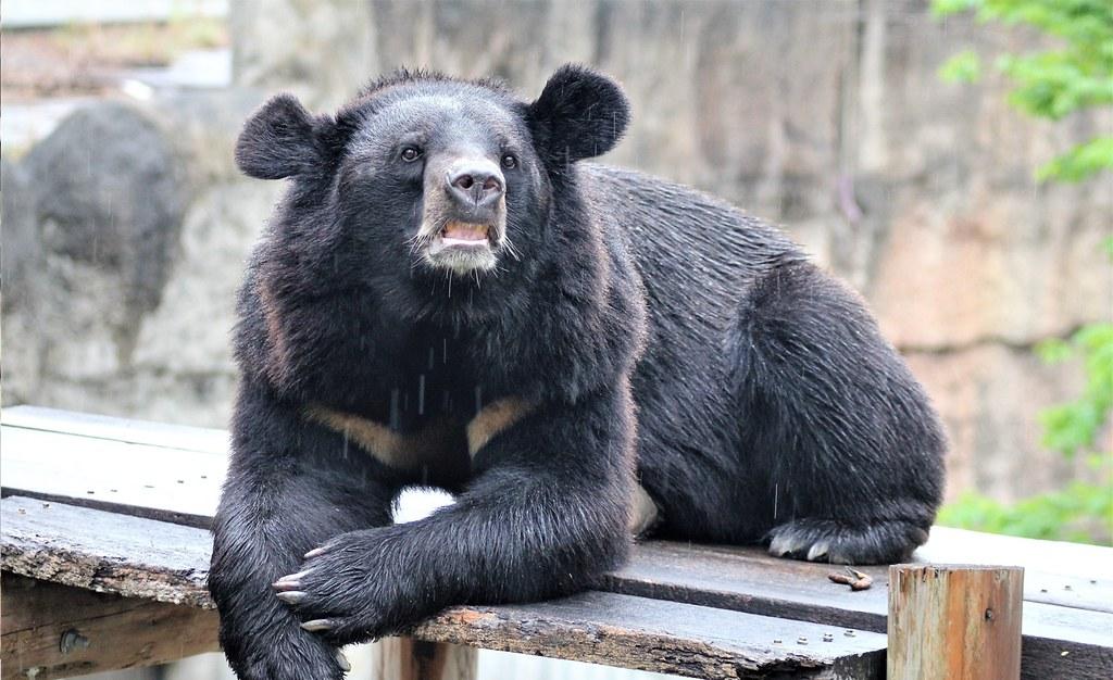購買樂園暢遊票,還可以帶小朋友前往動物園,看看可愛動物喔