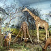 Antelope and giraffe diorama taxidermy Powell-Cotton Museum, Birchington Kent England