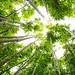 Bamboo Forest Oahu Hawaii