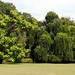 Arboriculture and lawn at Quex House Birchington Kent England warm cast