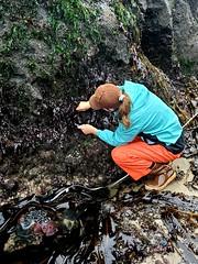 intertidal surveys_Cascade Head_6