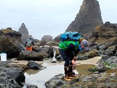 intertidal surveys_Cascade Head_5