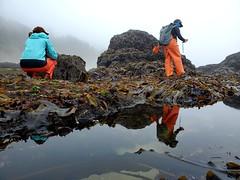 intertidal surveys_Cascade Head_1