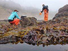 intertidal surveys_Cascade Head_2