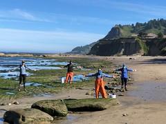 intertidal surveys_Otter Rock_social distancing