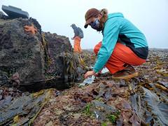 intertidal surveys_Cascade Head_7