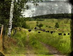 Anglų lietuvių žodynas. Žodis on the fence reiškia ant tvoros lietuviškai.