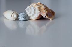 Photo of Sea Shells ...