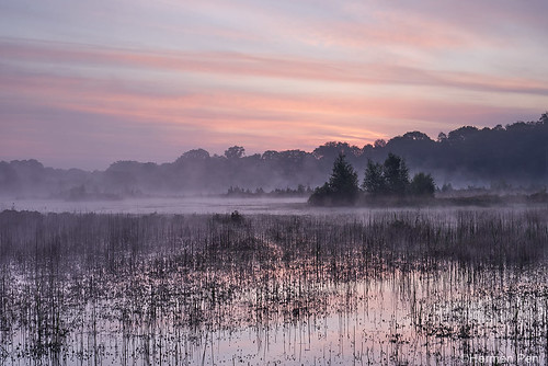 Early morning fog in the Kampina nature reserve