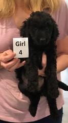Ella Girl 4 pic 3 7-5