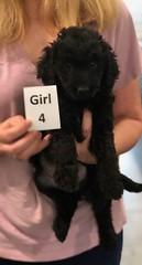 Ella Girl 4 pic 2 7-5