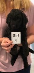 Ella Girl 4 7-5