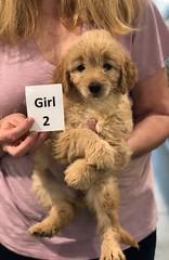 Ella Girl 2 pic 3 7-5