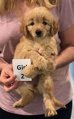Ella Girl 2 pic 4 7-5