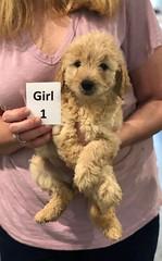 Ella Girl 1 pic 3 7-5
