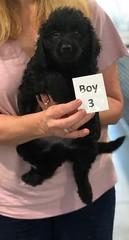 Ella Boy 3 pic 4 7-5