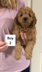 Sabrina Boy 2 pic 2 7-5