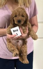 Sabrina Boy 1 7-5