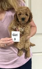 Sabrina Girl 3 pic 2 7-5
