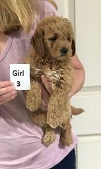 Sabrina Girl 3 pic 3 7-5